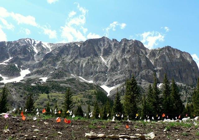 Research site below Gothic Mountain. Photo by Laurel Runcie