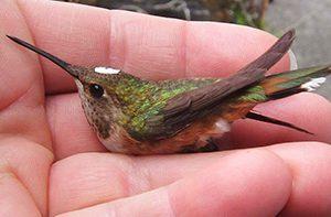 man holding a hummingbird
