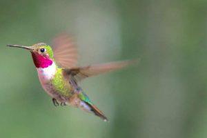 Science story hummingbird