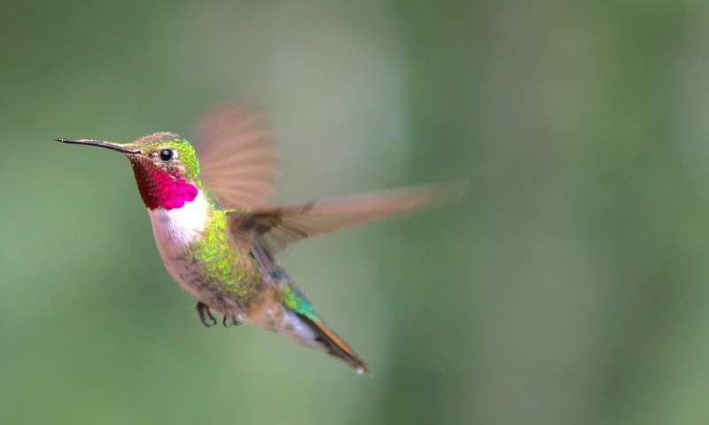 Science story hummingbird