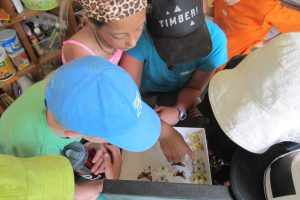 KNC 2015 Butterfly Investigation