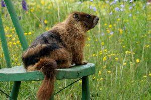 01 - Porch marmot